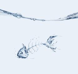 A water fishbone sinking in blue water.