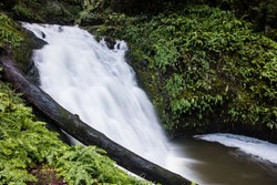 A waterfall flows into a shallow pool in a beautiful forest in northern California.