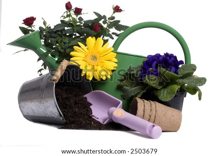 A watering bucket with a rose and all the gardening tools to plant it.