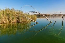 A waterscape image from Rietvlei Nature Reserve, Gauteng, South Africa.