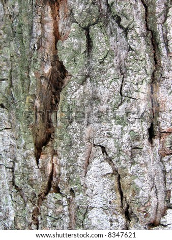 A Weather Tree Bark