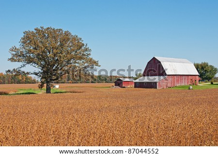 A weathered old red barn and outbuilding surrounded by fields of bright orange colored crops with a large single tree and background trees showing the bright colors of autumn
