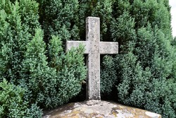 A weathered stone cross in front of a Thuja tree.