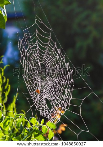 A web with dew drops on a dark background.  #1048850027