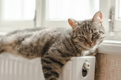 A well-groomed domestic cat lies on the radiator by the window. The concept of warmth and comfort in the house