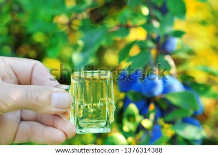 A well-known brandy rakia slivovitz in shot glasses with plums on wooden table in orchard.  Traditional Serbian brand alcoholic drink of organic production.Human hand pouring a well-known brandy rakia #1376314388