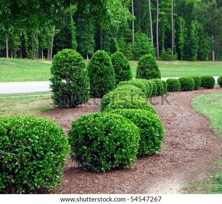 a well landscaped and manicured hedge of bushes with mulch and grass in a curved pattern.