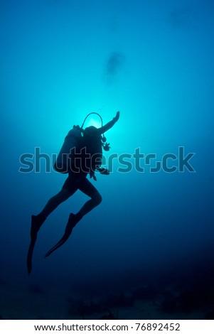 A whale shark feeding