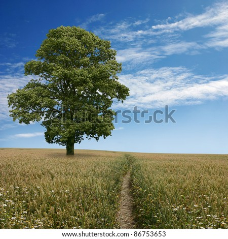 A Wheat Field Landscape with Blue Sky, Tree and Path