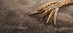 A wheatspikes on brown wooden background.Wheat Sheaf close-up.A bundle of cereal-crop stalks,wheat ears, bound together on the vintage table.Food background. Panoramic image, hi-res banner.