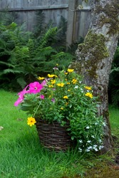 A whicker plant pot with a variety of flowers and plants.