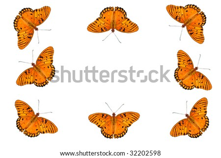 A white background with a border of Gulf Fritillary Butterflies, isolated on white, with copy space in the center