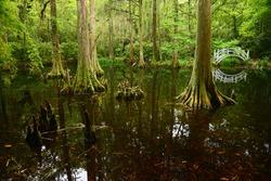 a white bridge in a swamp area in magnolia plantation near charleston