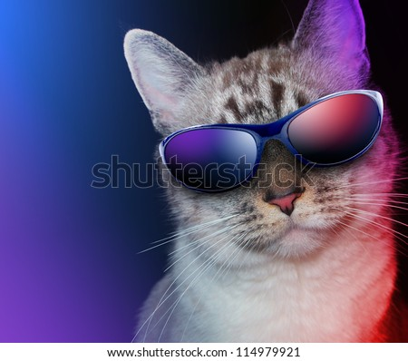 A white cat is wearing sunglasses on a black background with party lights around the feline. - stock photo