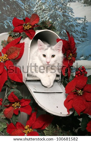 A white cat lays in an open mailbox decorated with red Christmas poinsettias and holly