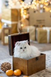 A white cat sits in a wooden box against the background of the New Year tree. There are tangerines and Christmas tree decorations near the box. Image with selective focus.