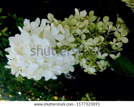 Free Photos White Clustered Flowers With Green Leaves Avopix