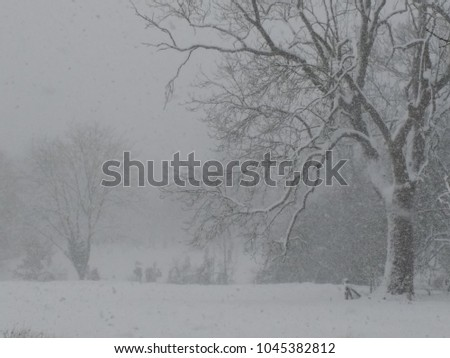 A white covered landscape in a snow storm blizzard with snow filled frozen sky icy tree in foreground and fields in thick white layer beyond in The countryside in Norfolk in Spring wild weather