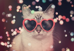 A white cute cat with red heart sunglasses is on a black background with colorful sparkles around the pet for a party or celebration concept.