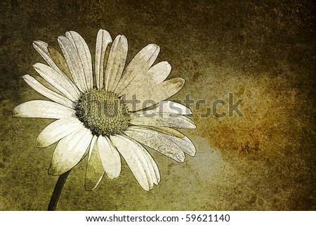 A white daisy in the sky aged