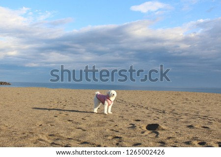 a white dog in the beach #1265002426
