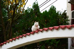 A white domestic cat lying down on red white arc of the house gate.Beautiful adult cat looking out of the shot with green trees in the background on day light