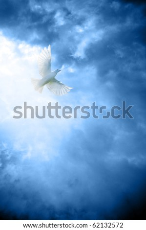 a white dove symbol of peace in heavenly sky