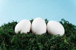 a white egg in a nest