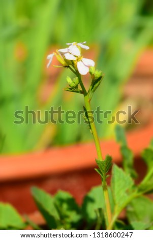 A white flower close up with blur background and insect