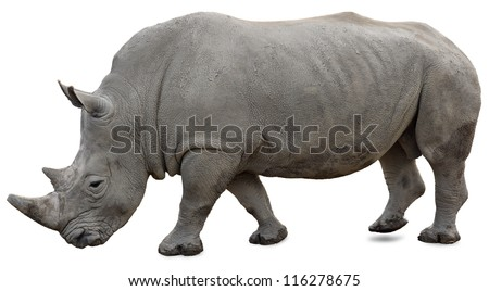 A white rhino on a white background yet visible
