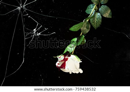 A white rose, covered with red blood, under a broken shattered glass. Concept: violence victim, innocence lost.  #759438532