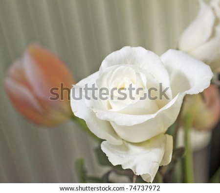 A white rose in a bunch, shallow depth of field