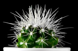 A white spiked green catus