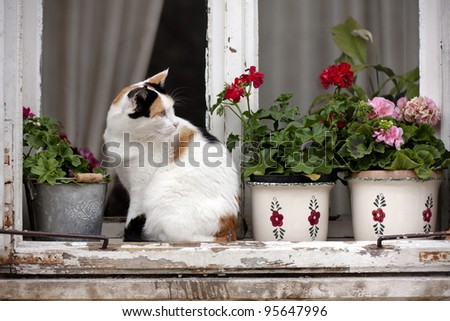 A white/spotted cat on an old window with flowerpots and vases.