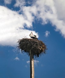 A white stork with a red beak and black wings in a nest on a pole. Observation of birds in their natural habitat. Ornithological observations. Stork as a symbol of the family