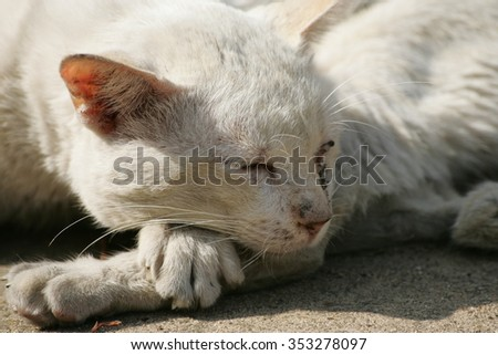 A white stray cat deeply sleeping on a cool day #353278097