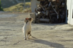 A white  stray cat is watching the street under the sunlight. Abandoned homeless cat. Pet abandoned. Pet on the street.