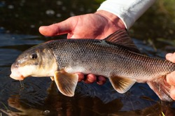 A white sucker fish caught while fly fishing