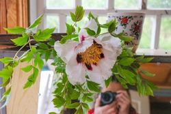 A white tree peony in full bloom lies on a mirror in a rural wooden house in Ukraine. The figure of the photographer is reflected in the mirror.