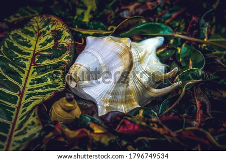 A white with brown stripe sea shell (shankh) on multiple colourful leaf.  Stock photo ©