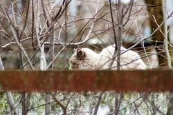 A white yard cat sleeps on a fence hidden by a beautiful pattern of branches and their reflections appearing from behind the rusted fence strip. Abstraction with animal that sleeps between two worlds