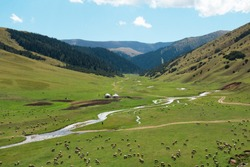 A wide alpine valley of the Assy plateau in a mountain gorge with a river, sheep graze in the valley, there are ethnic yurt houses, in the background the slopes of mountains with a dense forest, the s