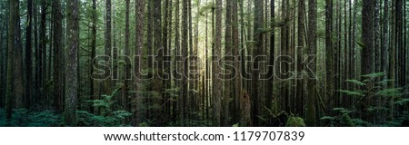A wide and view of a dense forest in British Columbia