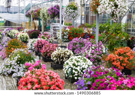 A wide display of various beautiful flowers growing in pot in a greenhouse on sale or nursery or plant shop #1490306885