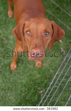 A wide-eyed dog eyes the photographer warily.