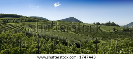 A wide panorama view of the beautiful rolling vineyards in Northern Italy.