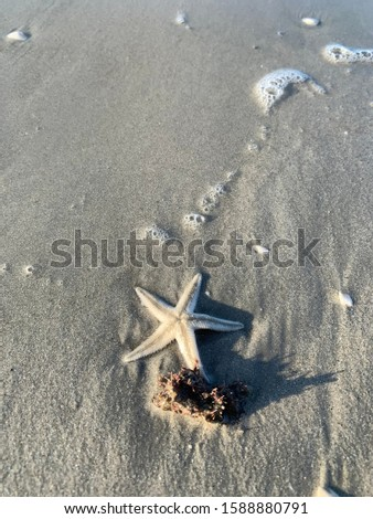 A wide view of stranded Starfish stranded with seaweed at Cenang Beach, Langkawi