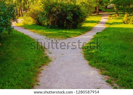 A wide walking trail splits into two narrow paths in the park.