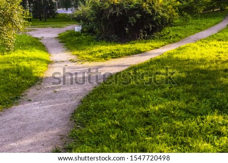 A wide walking trail splits into two narrow paths in the park in summer.