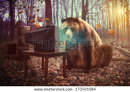 A wild brown bear is watching television in the woods with a crow on broken tv\'s for an entertainment, humor or surreal concept.